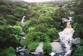 Image from www.irishhistorylinks.net